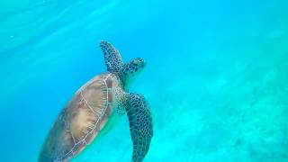 Creatures of Tobago Cays