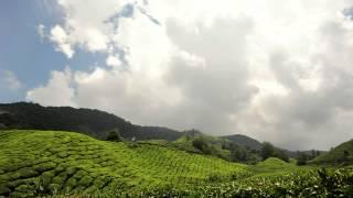 TIMELAPSE | Boh Tea Plantation,Cameron Highland.