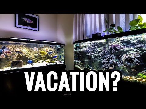 Feeding Your Fish While Away On Vacation