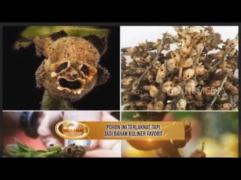 Khazanah 4 Maret 2019 - Pohon Terlaknat, Tapi Jadi Bahan Kuliner Terfavorit