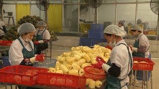 Tin Tức 24h : Xuất khẩu của Việt Nam sang Trung Quốc tăng gần 53%