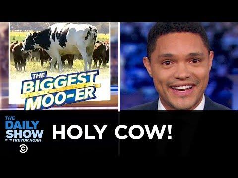 Australia's Glorious Giant Cow | The Daily Show