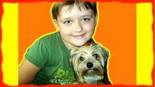 Дети И Собаки Только самые забавные домашние животные когда либо Забавная декоративная собачка