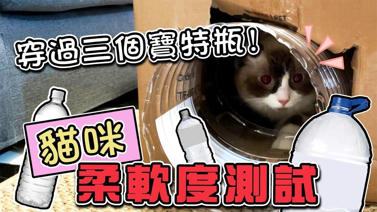 一豬小公主|貓咪柔軟度測試 穿過三個寶特瓶!
