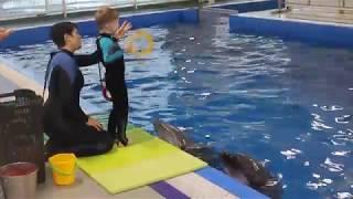 Дельфинотерапия в Москвариуме! игра с дельфинами