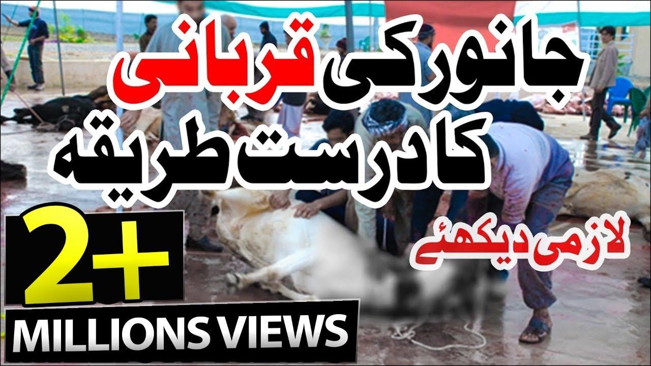 Qurbani Ka Amli Tareeqa   Bakra Eid Day   Practical Way of ...   1280 x 720 jpeg 158kB