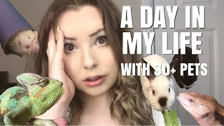 DAILY PET CARE ROUTINE WITH 30+ PETS!   A Day In My Life
