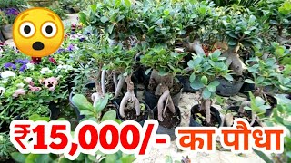 Plant for 15,000/-Best Plant Nursery in Delhi
