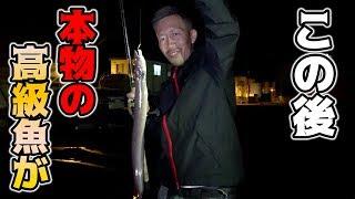 誰もが知ってる高級寿司ネタが堤防で釣れた!? thumbnail