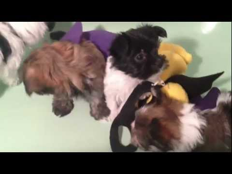 Super Puppies - Behind the Scenes - Fraud Fighting Puppies
