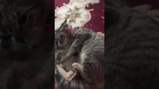 猫のてんかん ムギちゃん ♀ 7ヵ月 thumbnail