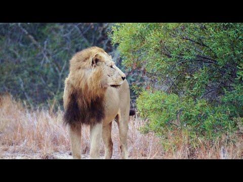Suspected poacher eaten by lions