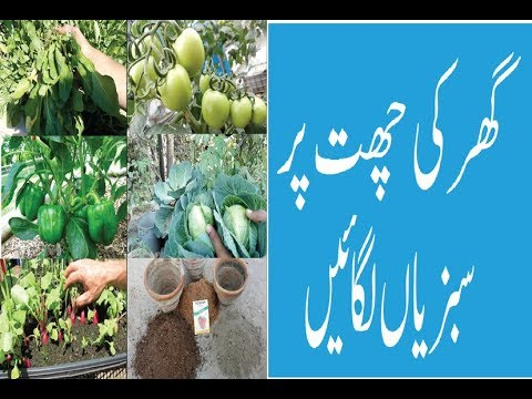 How to Terrace Vegetables Garden Tips and Tricks easy gardening urduhindi