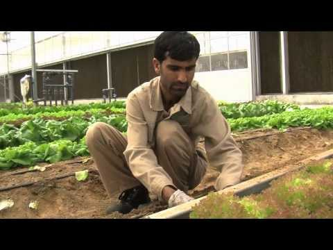 Visit an organic farm in Abu Dhabi