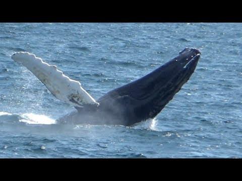 Stout Home Movies Summer 2017 Cape Cod Whale Watch Trip July 10 2017