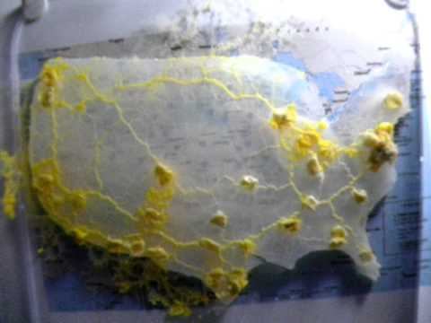 Physarum Approximates Highways In USA YouTube - Slime mold map of us