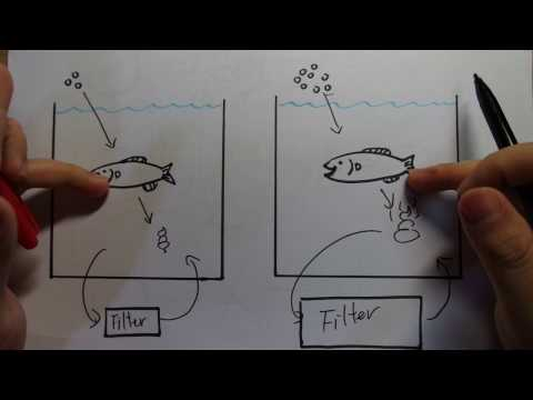 Aquarium Filtration Basics For Beginners. Part1: Your Fish Are Not The Source Of Pollution