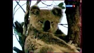 Сумчатые животные Австралии