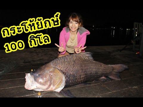 ตกปลากระโห้ยักษ์ 100 กิโลที่บึงสำราญ by กระบี่เดียวดาย
