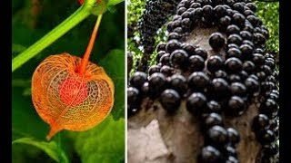 Most BIZARRE Fruits And Vegetables On Earth