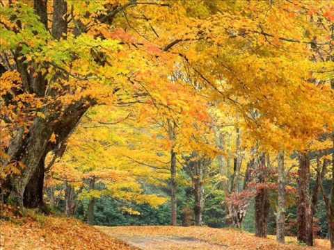 Осень, осень, листья пожелтели