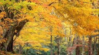 Скачать Осень осень листья пожелтели