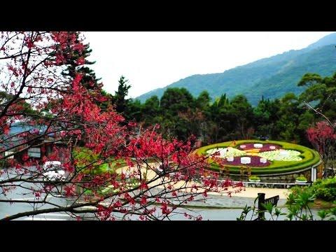 2015陽明山花季2015Yangmingshan Flower Festival