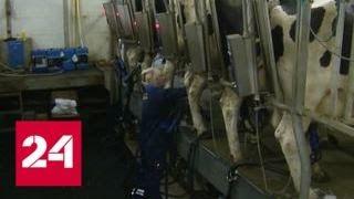 В России запретили разливное белорусское молоко - Россия 24