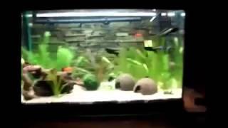 First Aquarium Setup 63 Liters