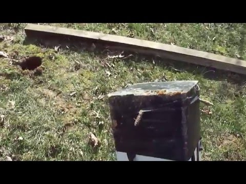 Removable Wood fence Post- Life Hack (Volume 1) - YouTube