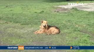 Під Києвом у містечку Українка масово труять собак