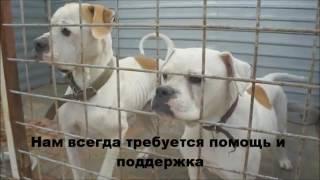 Приют для животных Дино.г.Волгоград