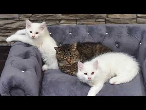 Feral grandpa cat's milkbar brings all the kittens to the yard - TinyKittens.com