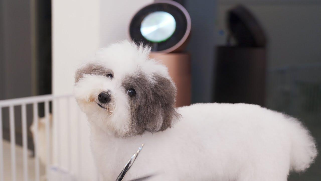 강아지미용실에는 털이 얼마나 많을까?