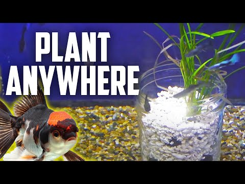 how to use a root tab in aquarium