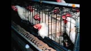Droits des animaux − vs − bien-être animal (FR)