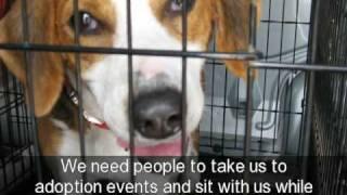 Volunteers Needed At Orange County Virginia Animal Shelter