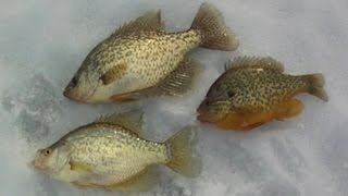 bait fishing 71 jigging for a few late ice panfish