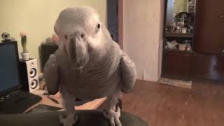 Разговорчивый Попугай Заставит улыбнуться любого))...