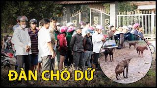 Cả nghàn người dân đi xem đàn chó khu vực Lê Quốc Tuấn ẩn nấp | QUỐC CHIẾN TV