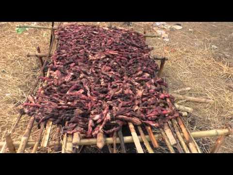 Gadhimai 2014 video report by Animal Equality