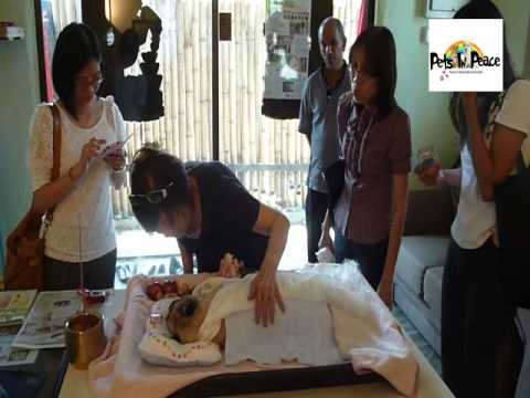 Pei Pei Pug Dog cremation funeral memorial cemetery burial bury Malaysia