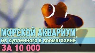 МОРСКОЙ АКВАРИУМ ДЛЯ НЕМО. Компактное море за 10 000 рублей