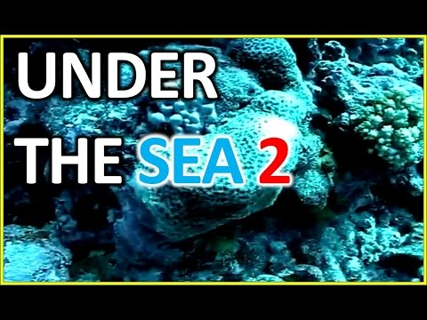 Diving Under the Sea :Diving Underwater Baker Island (part 2)