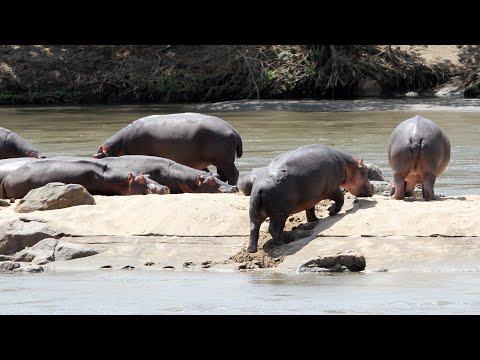 Malawi 2019:  Game Drive  Majete Wildlife Reserve