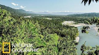 Ману - затерянный тропический лес Перу (National Geographic)