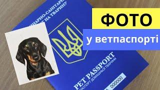 Оформлення ВЕТЕРИНАРНОГО паспорта - ЦМСС 31