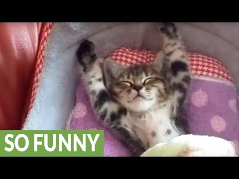 Sleepy kitten refuses to get out of bed