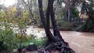אחרי למעלה מחצי שנה של התייבשות מעיינות התל בתל דן חזרו המים לזרום