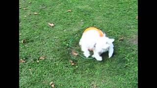 Śmieszne zwierzaki   Smieszne psy i Śmieszne koty 55